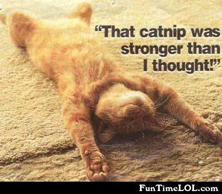 That catnip was stronger than I thought