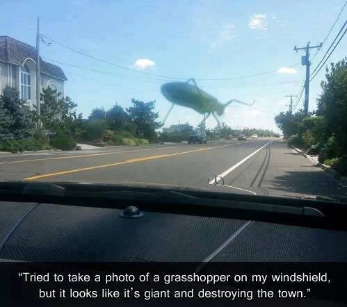 photo of grasshopper on my windshield