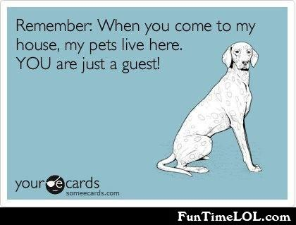 My pets live here. You are just a guest!