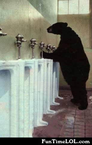 bear in the bathroom