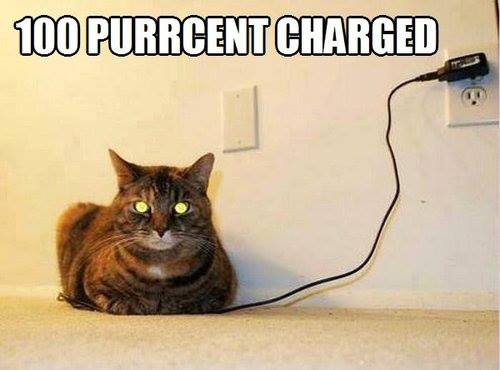 100 purrcent charged