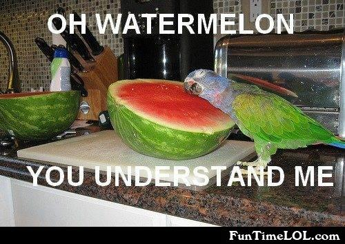 oh watermelon you understand me