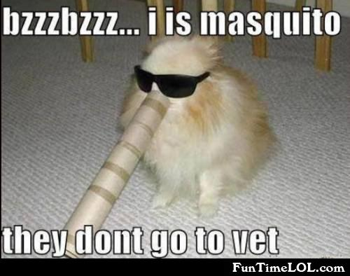 i is masquito.. they don't go to vet