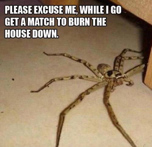 please excuse me while i go get a match to burn the house down