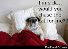 I'm sick... would you chase the cat for me?