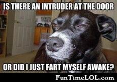 Is there an intruder at the door or did I just fart myself awake?