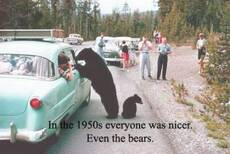 in the 1950s everyone was nicer. Even the bears