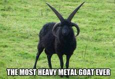 the most heavy metal goat ever