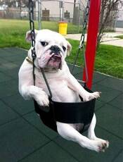 swinging dog